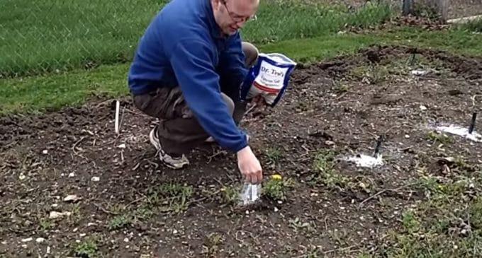Epsom Salt Garden Hacks