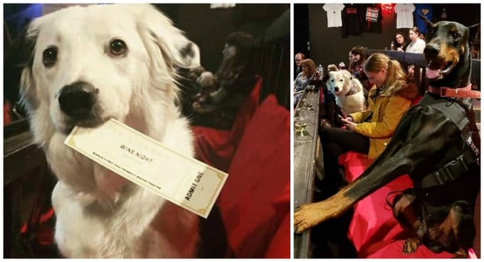The Movie Theater That Allows Wine, Whiskey, and Dogs