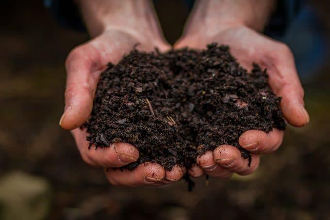 Stress Vaccine found in Dirt