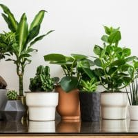 Surround Yourself With Plants and You Might Live Longer