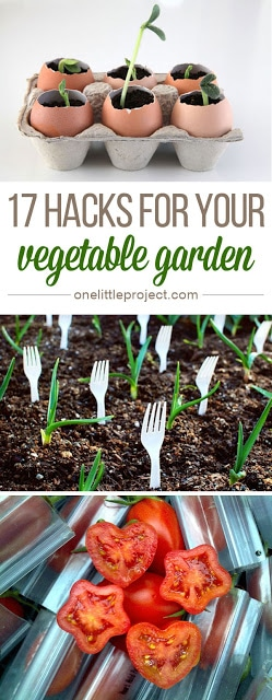 17 Hacks for Your Vegetable Garden