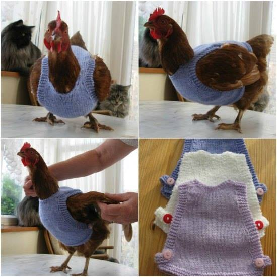 DIY Chicken Sweaters
