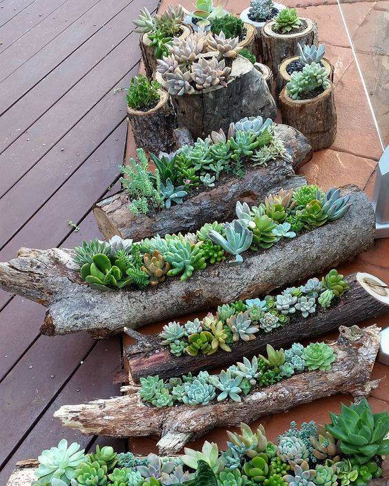 Succulents in Hollowed Out Logs