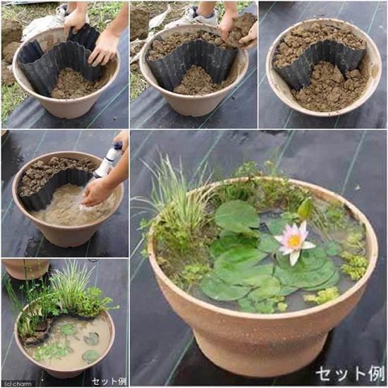 DIY Water Garden in a Pot!
