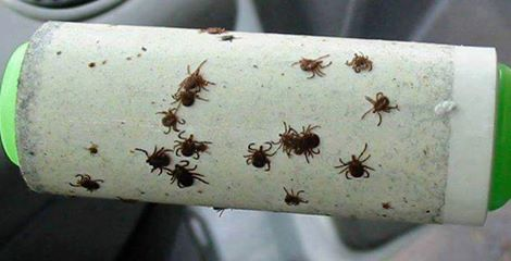 Roll your clothes with a lint roller after being in the woods to get hiding ticks...these are the BEST Camping Hacks, Gear, and Tricks!