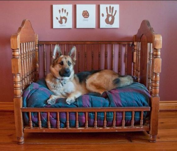 Beds For Old Dogs