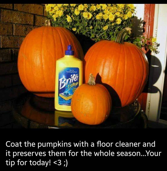 Preserving Your Pumpkins Tip These Are The Best Fall Craft Ideas Diy