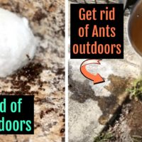 10 Super Clever Ways to Get Rid of Ants for Good!