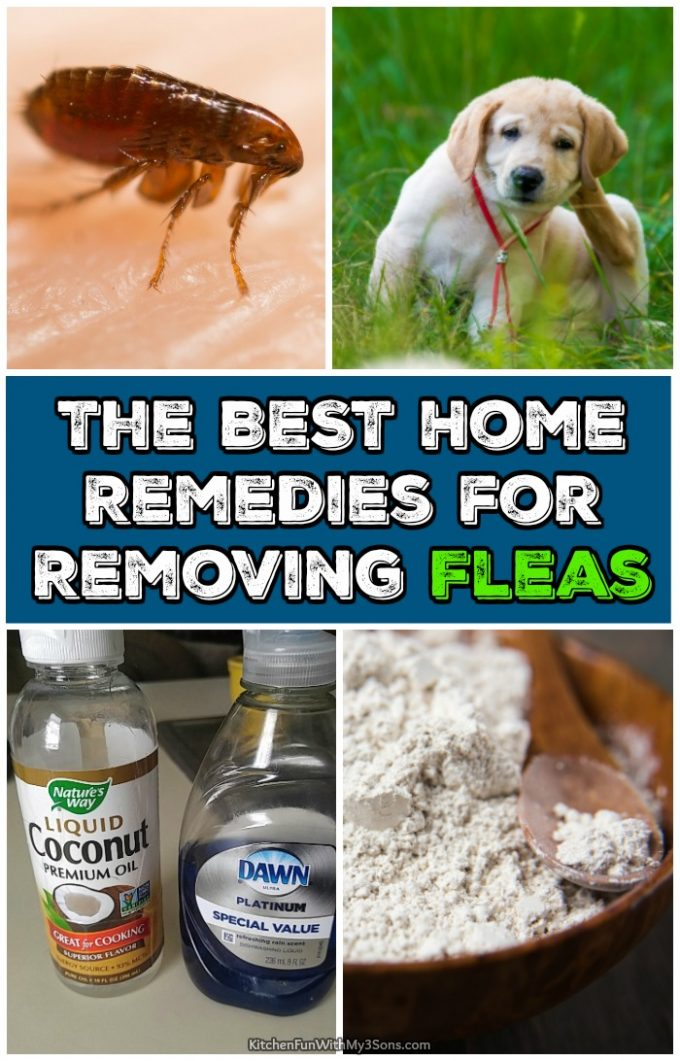 Best Home Remedies for Removing Fleas