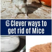 6 Clever Ways to Get Rid of Mice That Actually Work