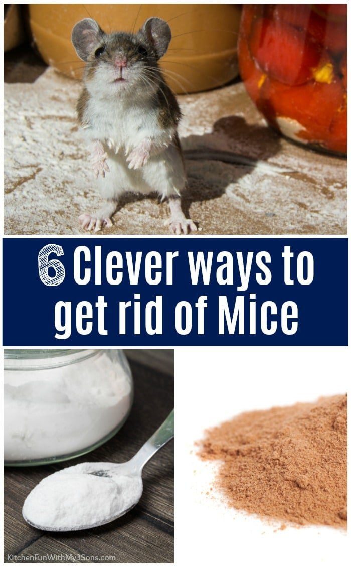 6 Clever Ways To Get Rid Of Mice That Actually Work Kitchen Fun With My 3 Sons