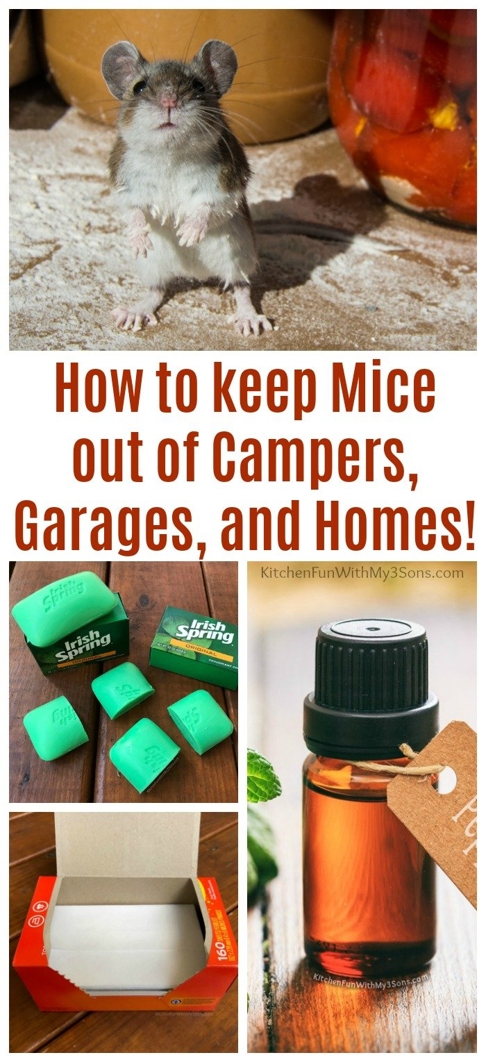 How to keep Mice out of Campers - Kitchen Fun With My 3 Sons