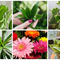 From NASA: The Best Plants to Clean Your Air