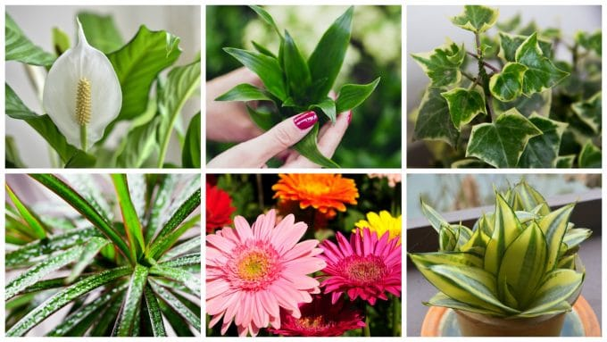 The Best Plants to Clean Your Air
