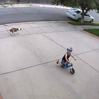 Kid Riding Bike in Driveway